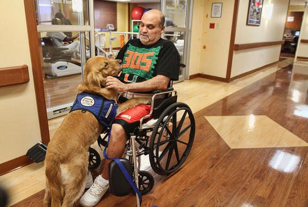 -Liz, a 5-year-old golden at Memorial Hospital South in Hollywood, spends time with  with physical therapy patient, Humberto Muniz.