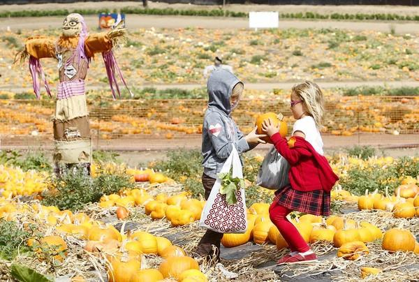 First-grader Alice Hahnmann, left, gives her pumpkin to Sophia Swanson, who had trouble finding one she liked, during Lincoln Elementary's field trip to Tanaka Farms on Friday.