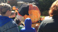 On tonight's WGN News at Five, we went to watch Wheaton resident Joe Adkins surface carve an 883 pound pumpkin he grew in his side yard. Joe caught giant pumpkin fever years ago when he saw an artist carving one at Six Flags Great America's Fright Fest.