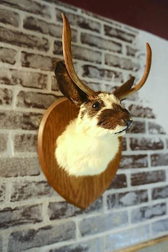 A bust of a fictional Jackalope adorns the wall of the new Wild Goose Tavern.