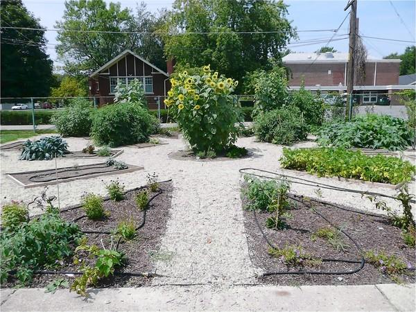 A garden planted by teachers and students at Riverside Brookfield High School is yielding vegetables and herbs used in meals prepared in the school's cafeteria.