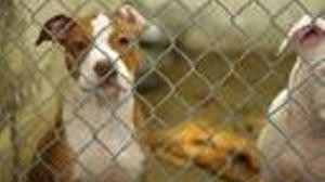 Board offices up for nominations for Central Kentucky Regional Humane Society in Lancaster