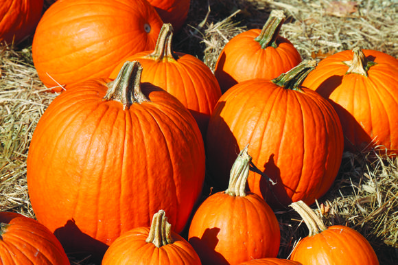 The East Jordan Pumpkin Festival will take place Saturday, Oct. 20, in the downtown area. Most of the festivities take place from 1-4 p.m.