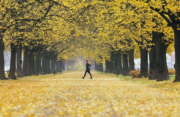 A woman walks amid autumn leaves at a Moscow park.