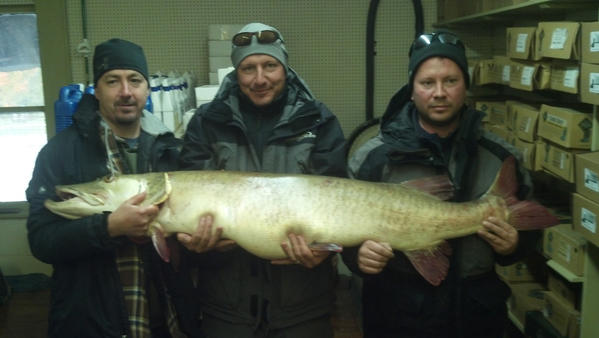 Joseph Seeberger of Portage (center) landed this new state-record Great Lakes muskellunge while fishing for bass, using a minnow on Lake Bellaire.