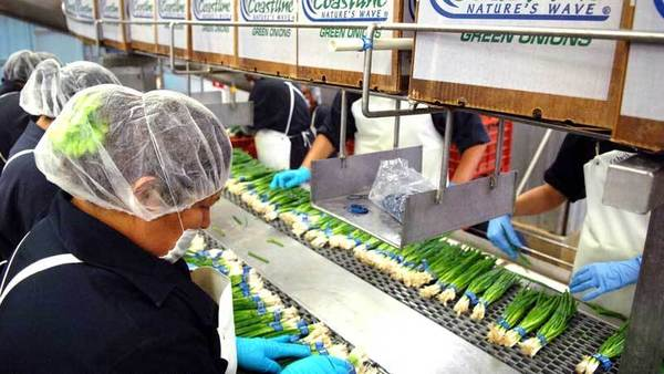 Employees pack onions at Larry Cox's packing shed Wednesday south of Mexicali.