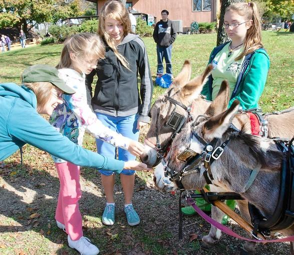 Cheryl Davidson (left) of Emmaus, with her daughters Ashley, 10, and Kayleigh, 12, pet Cecely (front) and Jo-Jo. Cecely, a miniture Mediterranean pony, and Jo-Jo, a miniature Sicilian pony, were giving cart rides led by 13-year-old Mia Bobenko (right) of Orefield at the Gress Mountain Ranch in Orefiled during Sunday's Open Gate Lehigh County Farm Tour.