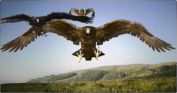 'Birdemic'