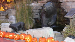 Night of the Living Zoo providing a spooktacular night for children