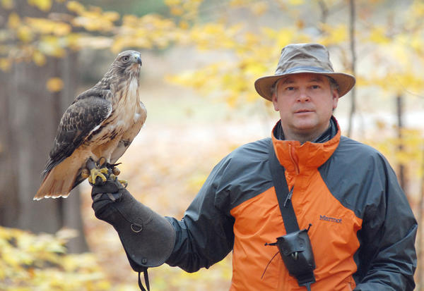 Brook Barney of the Charlevoix area hunts with his red-tailed hawk, Ayla.