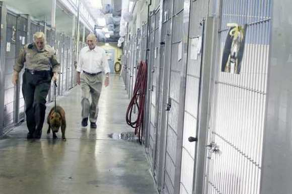 Sr. Animal Control Officer Stacie Levin, from left, walks with, Dannie, an 8-year-old pitbull and with veterinarian Dr. Martin Small as they take out Dannie outside at the Burbank Animal Shelter on Tuesday, March 20, 2012.