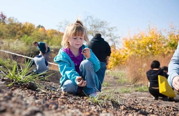 Quinn McGinnis, 5, and her dad, Sean, hunt for fossils at Dinosaur Park Saturday, Oct. 20. The park is open twice a month for amateur fossil-hunters, and several important finds have been made in the last year.