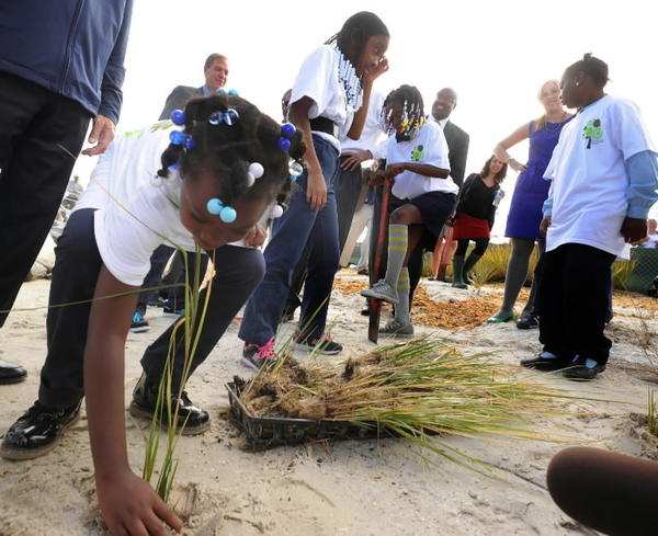 Students from Friendship Academy plant grass on beach in new 11-acre nature area created at Masonville Cove.
