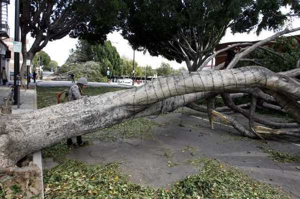 Winds caused damage throught Pasadena. Weather forecasters are warning of high winds starting Thursday.