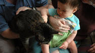 Ask the pet expert: introducing a new baby