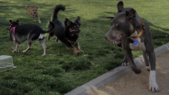 Dogs enjoy some play time at a park next to the headquarters of the Los Angeles Police Department. Rescue animals could still be sold under the ordinance.