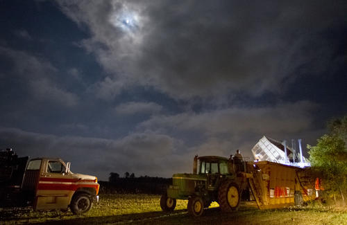 Clouds move in obscuring the moon Thursday evening over Carroll Farms in Isle of Wight. The cloud cover aided farmers by keeping dew off of cotton so they continue harvesting their crop in advance of the Hurricane Sandy. On Thursday Carroll farms still had about 300 acres to go. If all goes well Brian Carroll thinks he can get in about 90% of his cotton before the storm hits. As of 9:30 AM Friday, farmers had harvested another 30 acres with more to go.