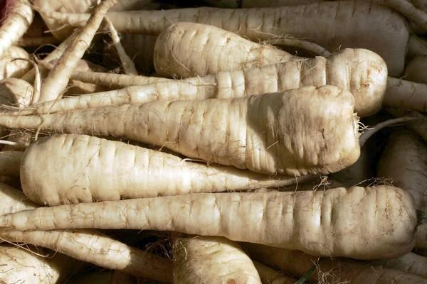 The underappreciated parsnip is among the sweetest of the root vegetables.