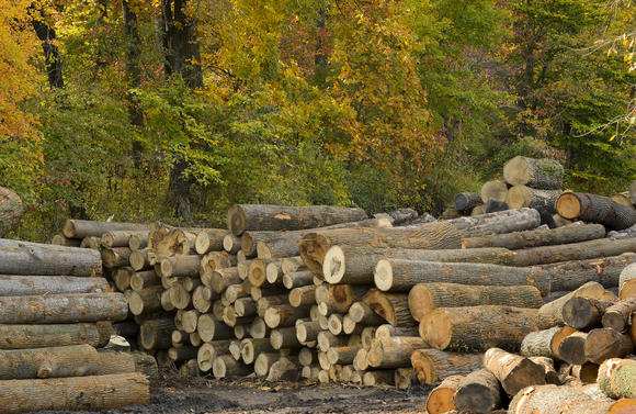 Maryland's timber industry