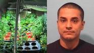Naperville police who arrested a Chicago man on pot charges found more than $1 million of marijuana in an indoor-growing operation when they searched his home this week, police said today.