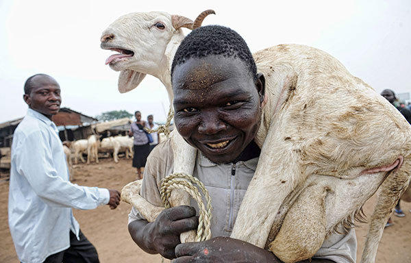 A man carries a ram to a buyer at Kara cattle market in the Ogun State of Nigeria, on October 26, 2012. Muslim faithfuls gathered worldwide to celebrate Eid-el-Kabir, an annual Islamic festival marked with the slaughtering of rams.