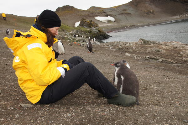 A young penguin checks out Kelly Rae Haskell during her trip to Antarctica. She and her father, Bill Edwards, traveled to the continent in January. It was the last of the seven continents they have visited. Courtesy Photo