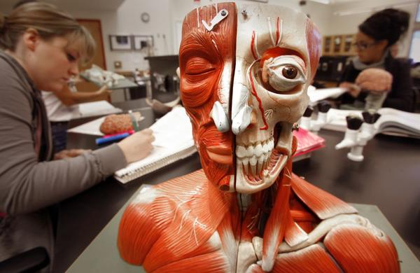 Students in a human anatomy class take notes while they dissect and reassemble a model of a human skull.