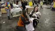 VIDEO Sandy displaces animal shelter