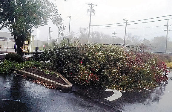 A large portion of a tree broke off Monday afternoon during Hurricane Sandy, blocking the drive-through window of the Taco Bell in Martinsburg, W.Va.