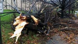Hurricane Sandy's impact on the Lehigh Valley: Power outages, damaged trees, closed roads