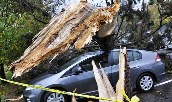 A car parked at Wesleyan University in Middletown bears the brunt of Sandy's wind gusts, which snapped a tree at its trunk Monday.