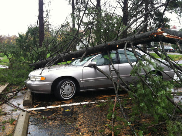 A tree crushes a car at Arden Court in Trexlertown.