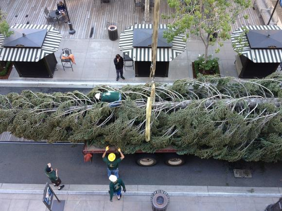 A view from above as crews unload the white fir tree, more than 100 feet tall, at the Americana at Brand Oct. 30, 2012.