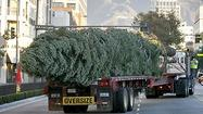 Photo Gallery: Christmas Tree arrives at Americana at Brand