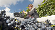 Wine levels worldwide shrinking to 37-year low
