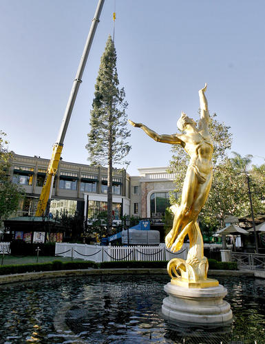 The annual Christmas tree arrived at the Americana at Brand on Tuesday, Oct. 30, 2012.  The tree, a 104-foot whit fir arrived on a flat bed truck from Mt. Shasta, will be decorated with 10,000 lights ans 15,000 ornaments during the next two weeks.
