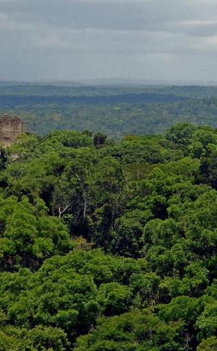 Tourists trek through Tikal National Park.
