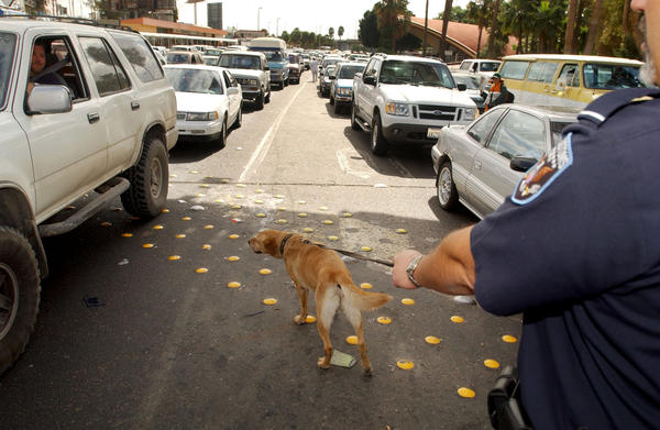 A drug-sniffing yellow lab is seen in 2003 in San Ysidro, Calif.
