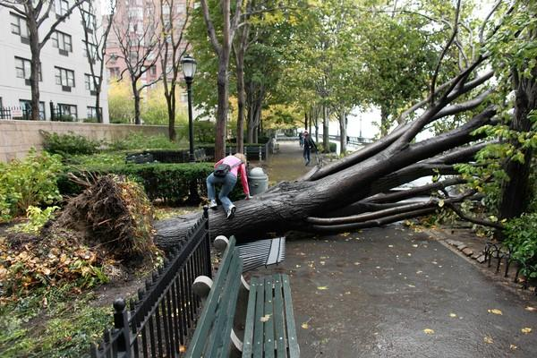 A pedestrian climbs over a fallen tree Tuesday in the Battery Park neighborhood of Manhattan, New York. Superstorm Sandy reminded us all that nature is more powerful than humans.