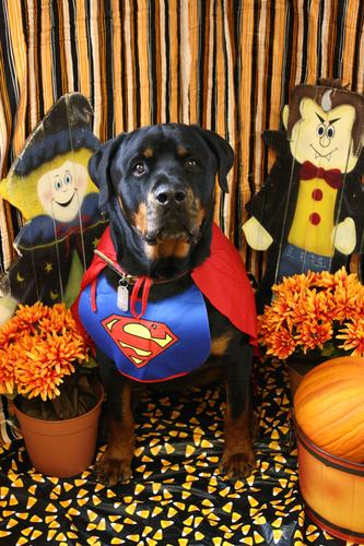 Photo Gallery: Halloween at Heartland Vet