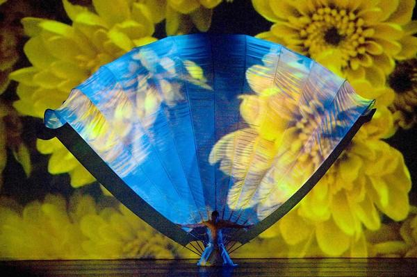 Momix performs 'Botanica' Nov. 4 at Zoellner Arts Center. The multimedia work is grounded in nature'schanging and beautiful imagery, and features costumes, props, puppetry and music.