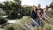 Photo Gallery: Drought-tolerant plants in Burbank home's front yard