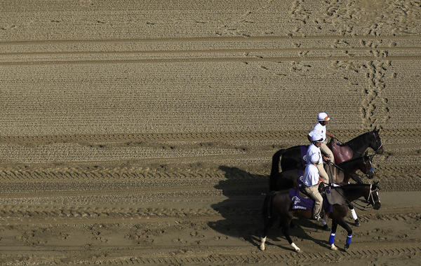 Horses warm up at Santa Anita Park during the 2012 Breeders' Cup in November.