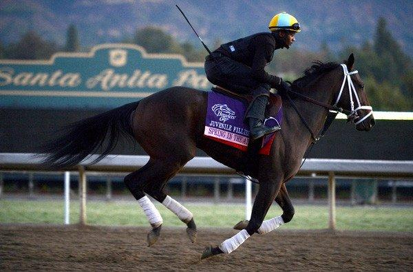 Spring in the Air is taken through its paces during a workout at Santa Anita last Monday.