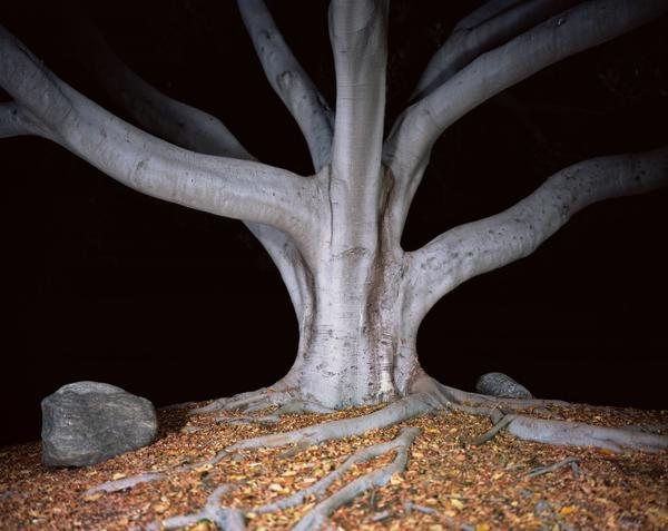 Ken Gonzales-Day's stark portraits of lynching trees are quietly beautiful and vaguely ominous.