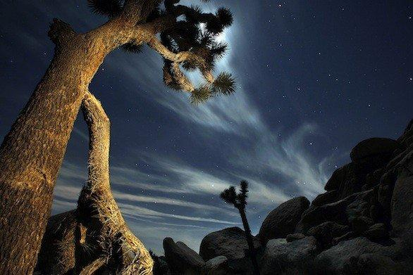 Namesake trees at Joshua Tree National Park east of Los Angeles. National parks and forests waive admission this weekend for Veteran's Day.