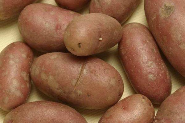 Potatoes should be stored in a dark, cool and well ventilated environment.