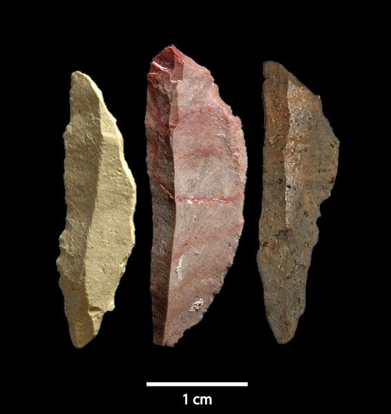 A collection of blades found in a South African cave shows that humans used complex tools as long as 70,000 years ago and also suggests that they were able to pass down the technique from generation to generation. Above, three of the blades, called microliths.