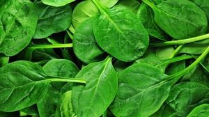 Wegman's Recalling Spinach Mix Linked to E coli Outbreak