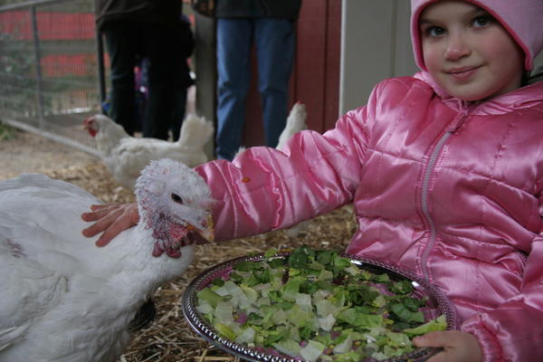 On the menu for Farm Sanctuary's alternative holiday feast: salad, cranberries and pumpkin pie.